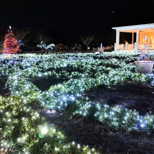 Botanical gardens Christmas lights snowy bushes