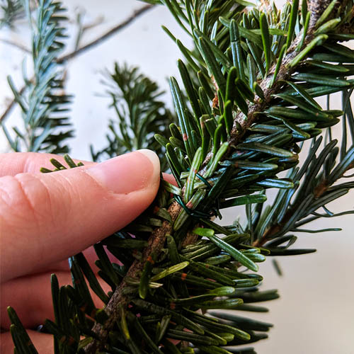 DIY Christmas wreath securing branches